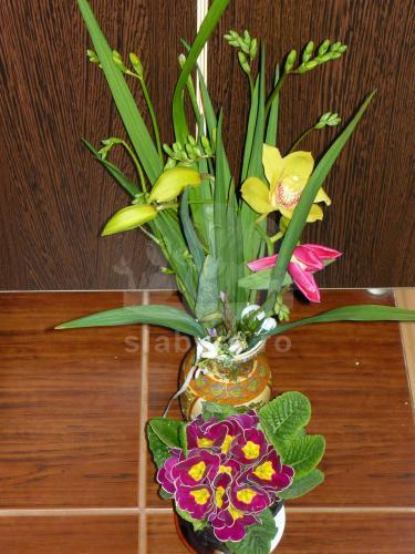 Florile primite azi :), dar mai asteptam sotulica nu a ajuns acasa:)